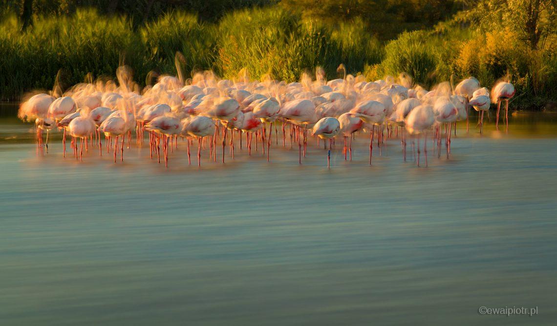 Flamingi, długa ekspozycja, warsztaty fotograficzne w Prowansji