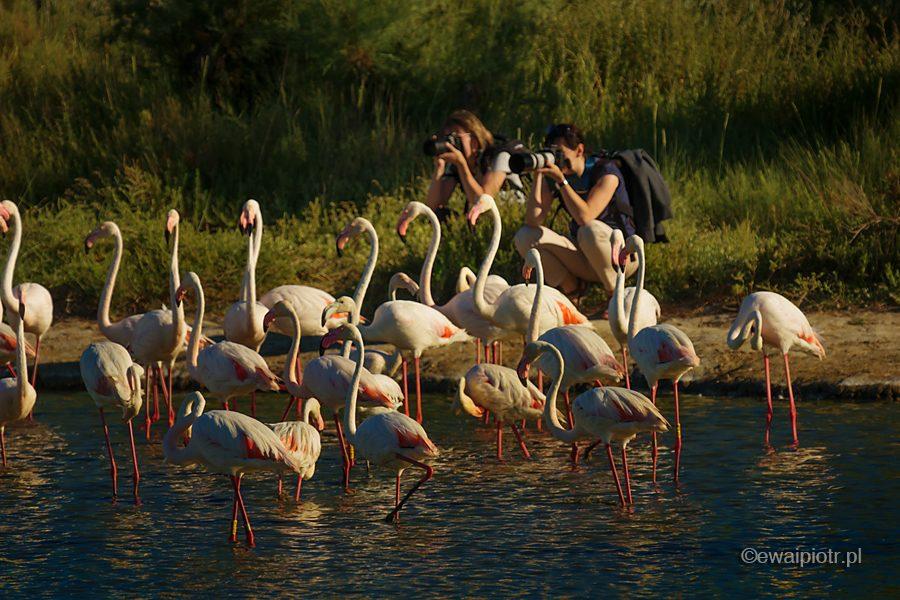 Fotografowanie flamingów, warsztaty fotograficzne w Prowansji