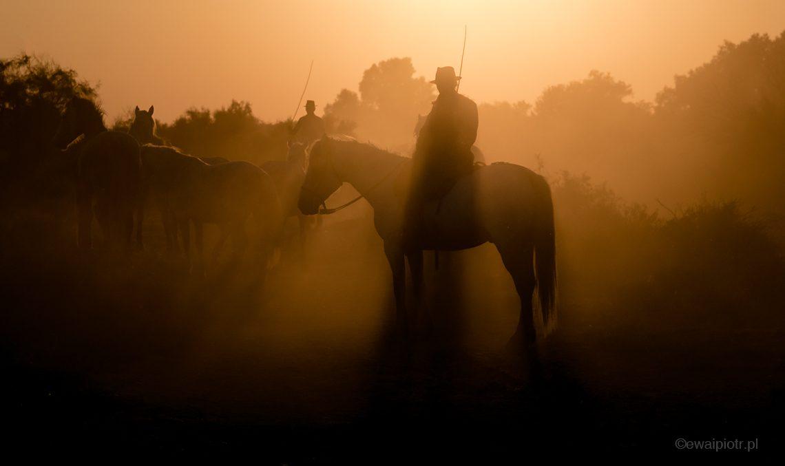 Jeździec na koniu pod słońce, fotowyprawa Prowansja