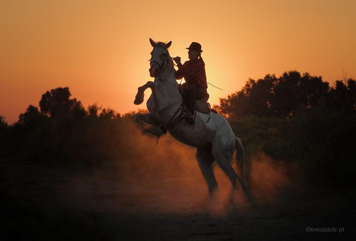 Koń z Camargue, zachodzące słońce, warsztaty fotograficzne, Francja
