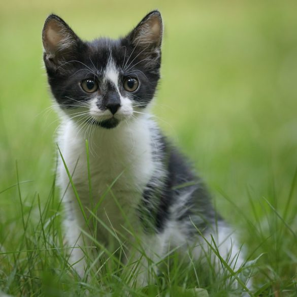 kot w trawie, łaciaty kot