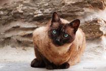 Koty świata Koty świata