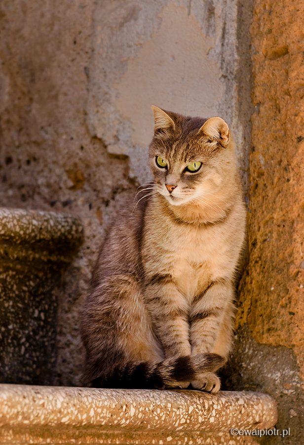 Kot z Pitigliano, Toskania