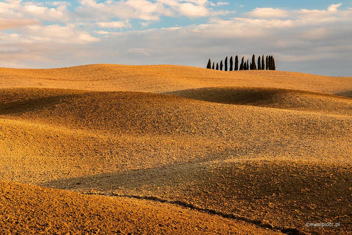 Toskania, jesień, cyprysy, wzgórza, fotowyprawa, warsztaty fotograficzne