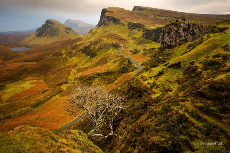 Drzewko w górach Quiraing, Szkocja, Skye