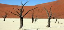 Fotowyprawa do Namibii – maj 2020 Fotowyprawa do Namibii – maj 2020