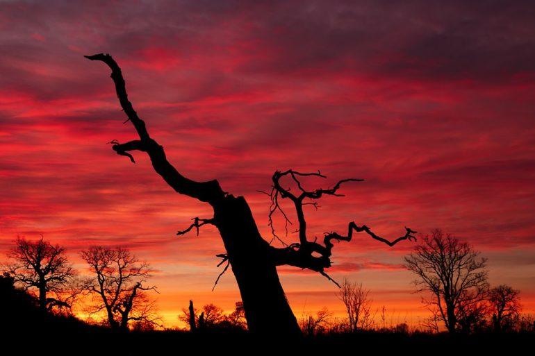 Ogień nad dębami, Rogalin, wschód słońca, warsztaty fotograficzne w Rogalinie