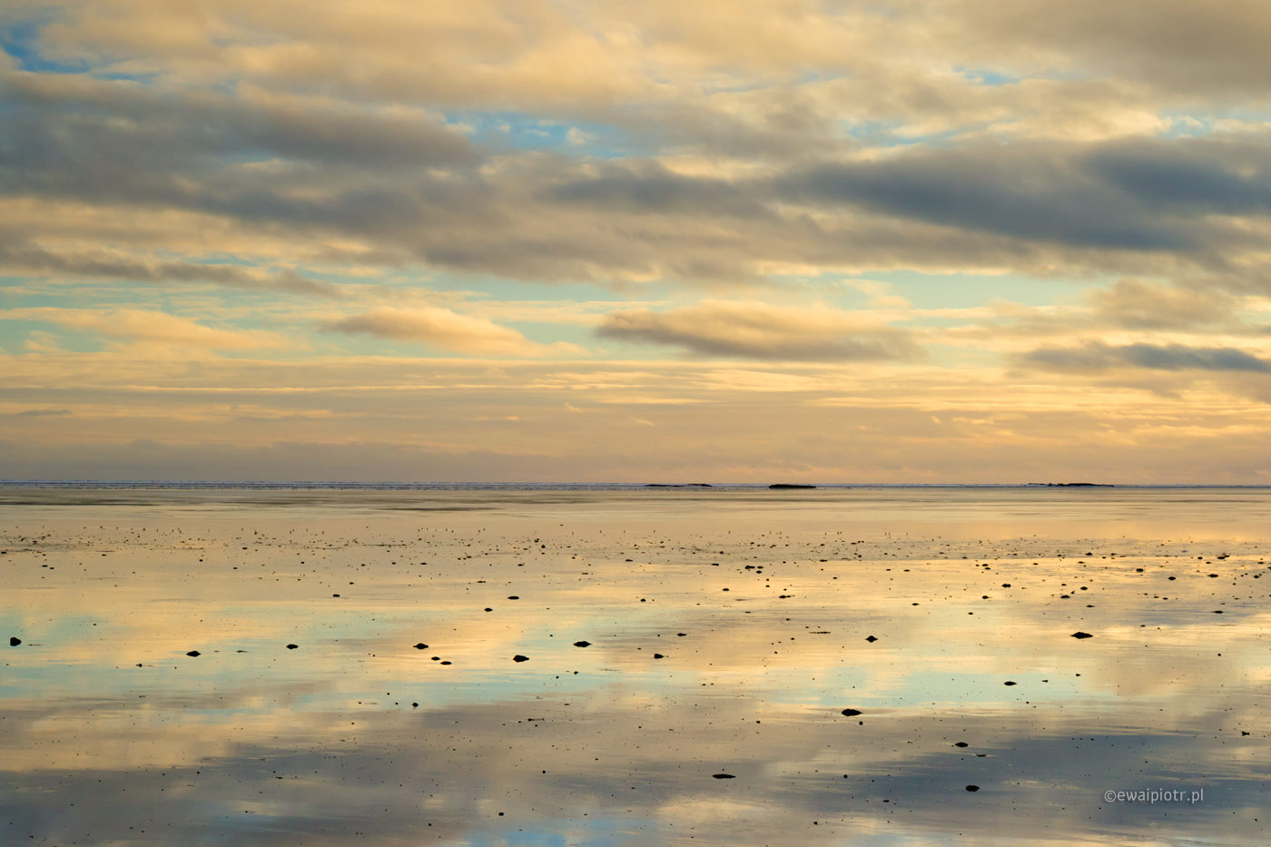Piegowate morze, Islandia