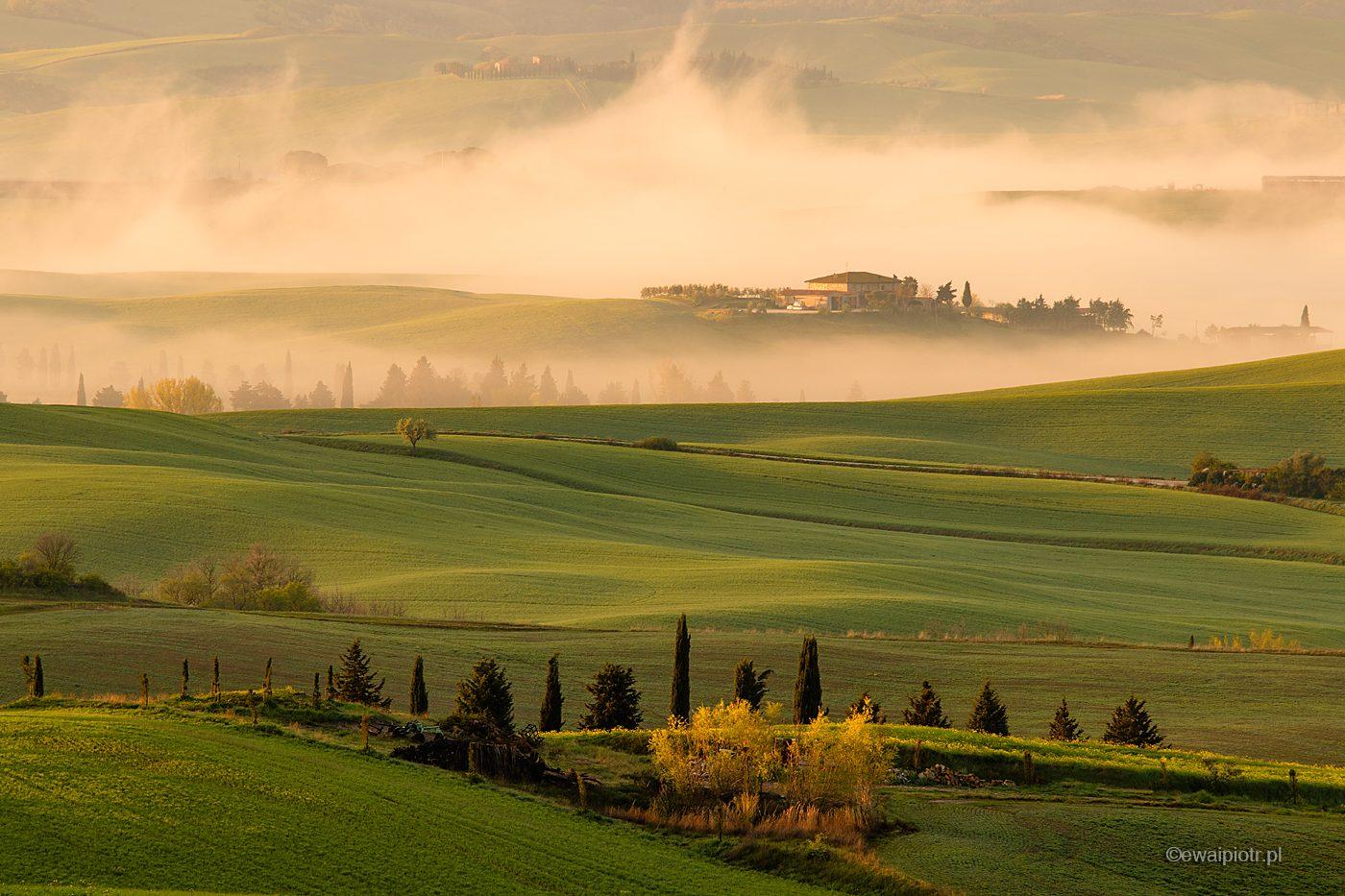 Cyprysy, mgły i wiosna, Toskania