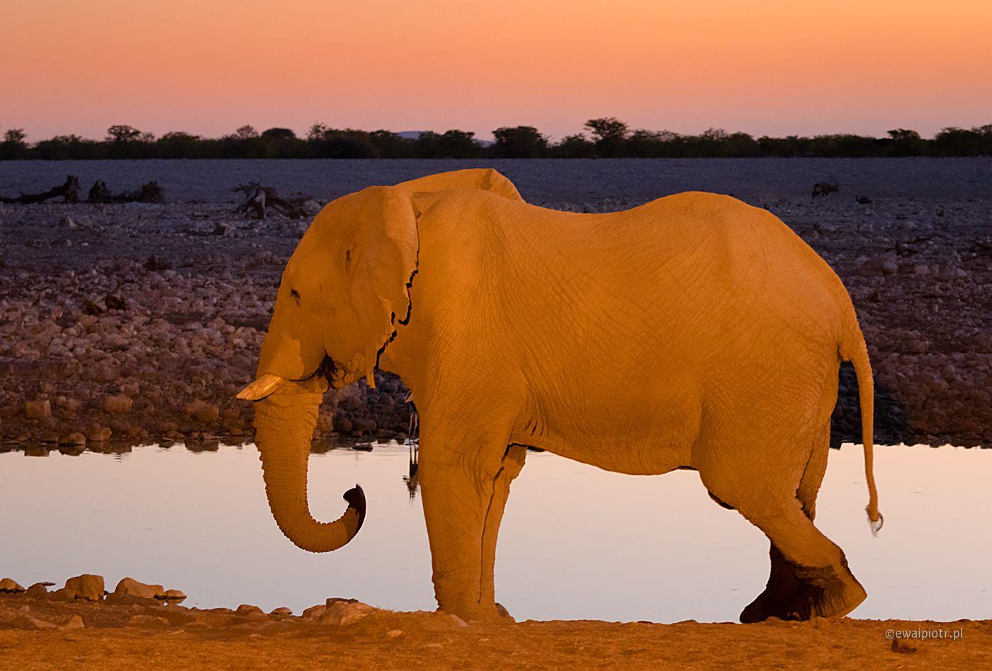Żółte i fioletowe, Namibia, słońc nocą