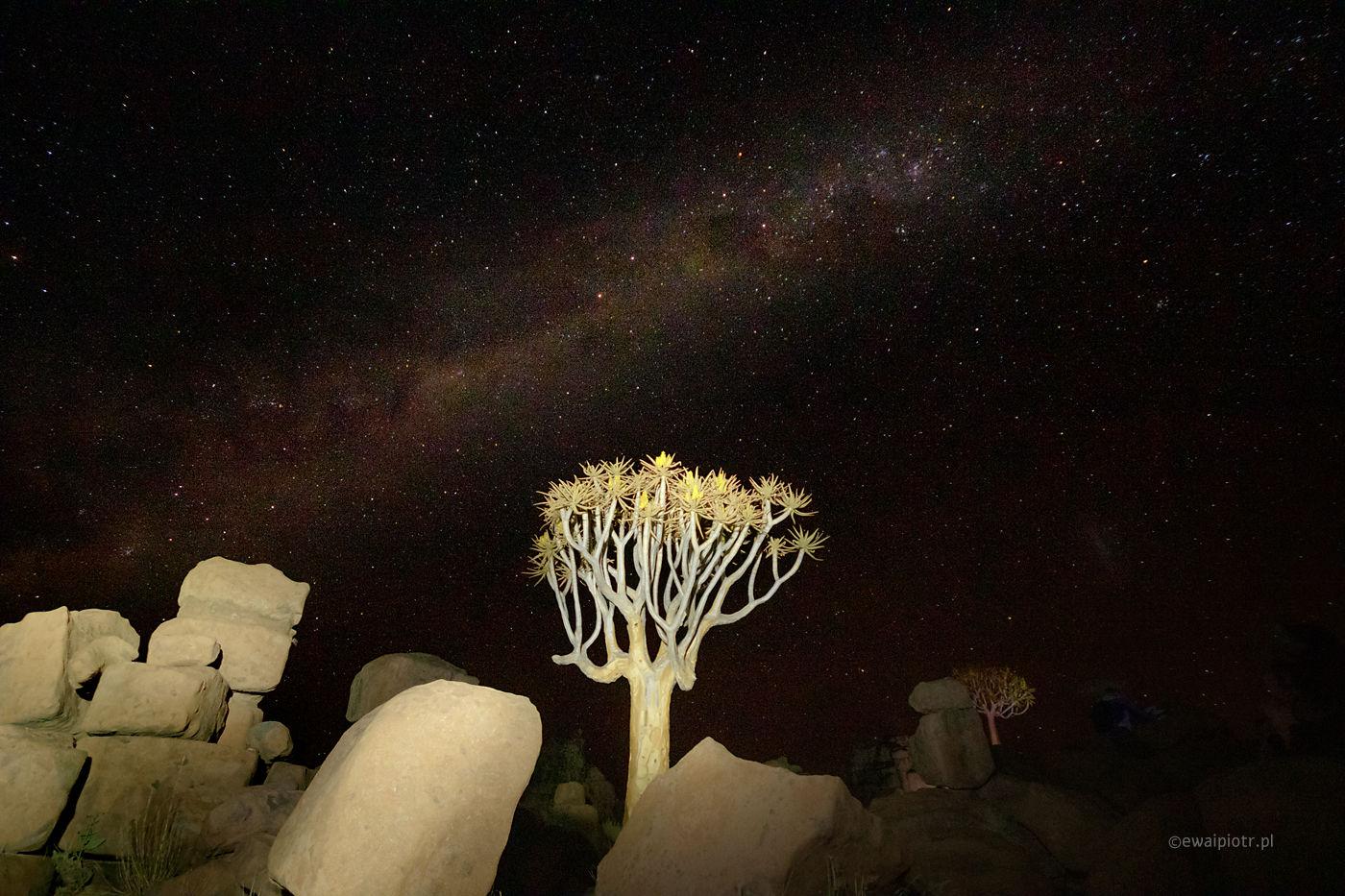 Noc pod drzewem kołczanowym, Namibia