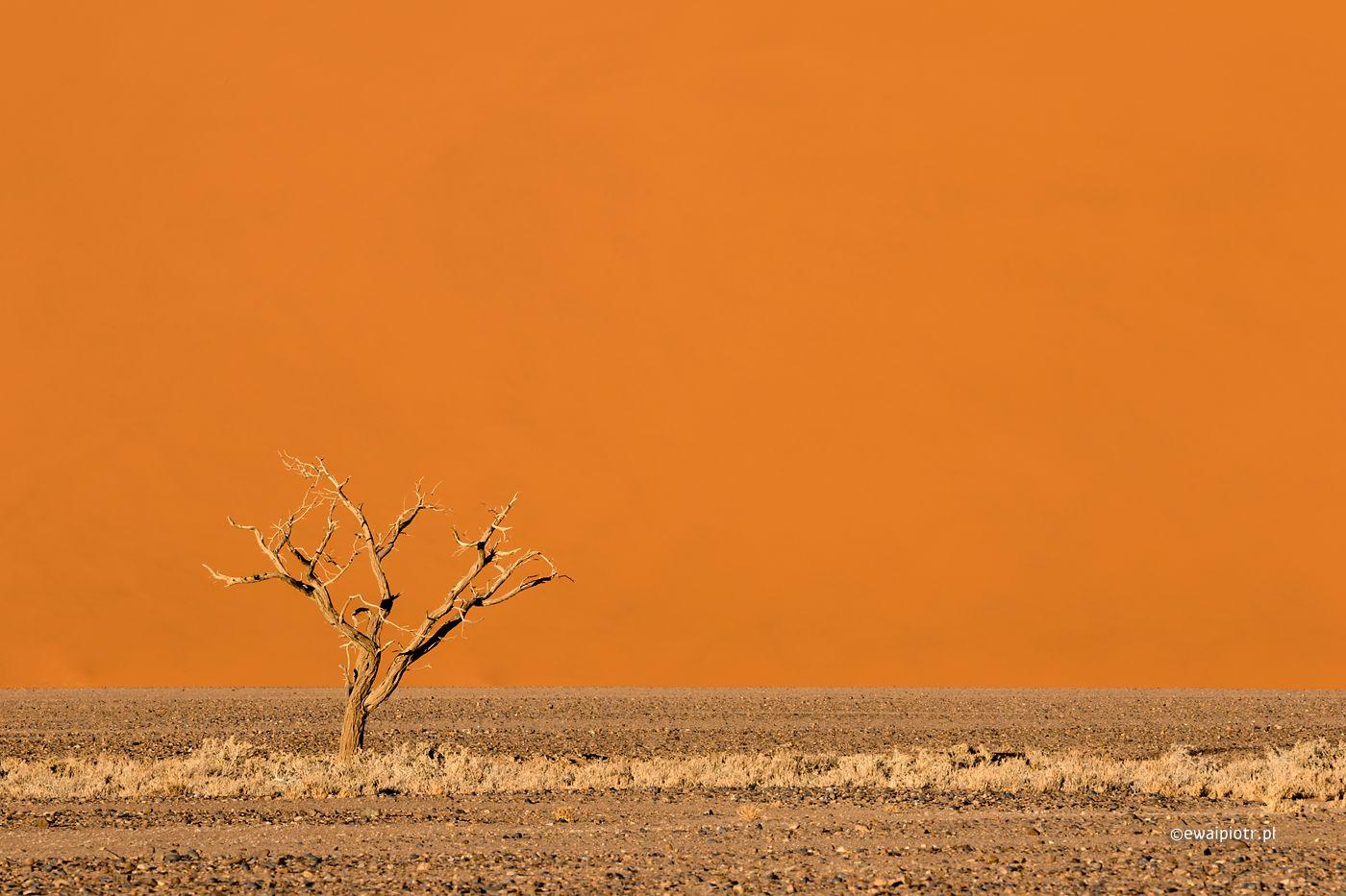 Drzewo i wydma, Namibia, przestrzeń negatywna, kompozycja