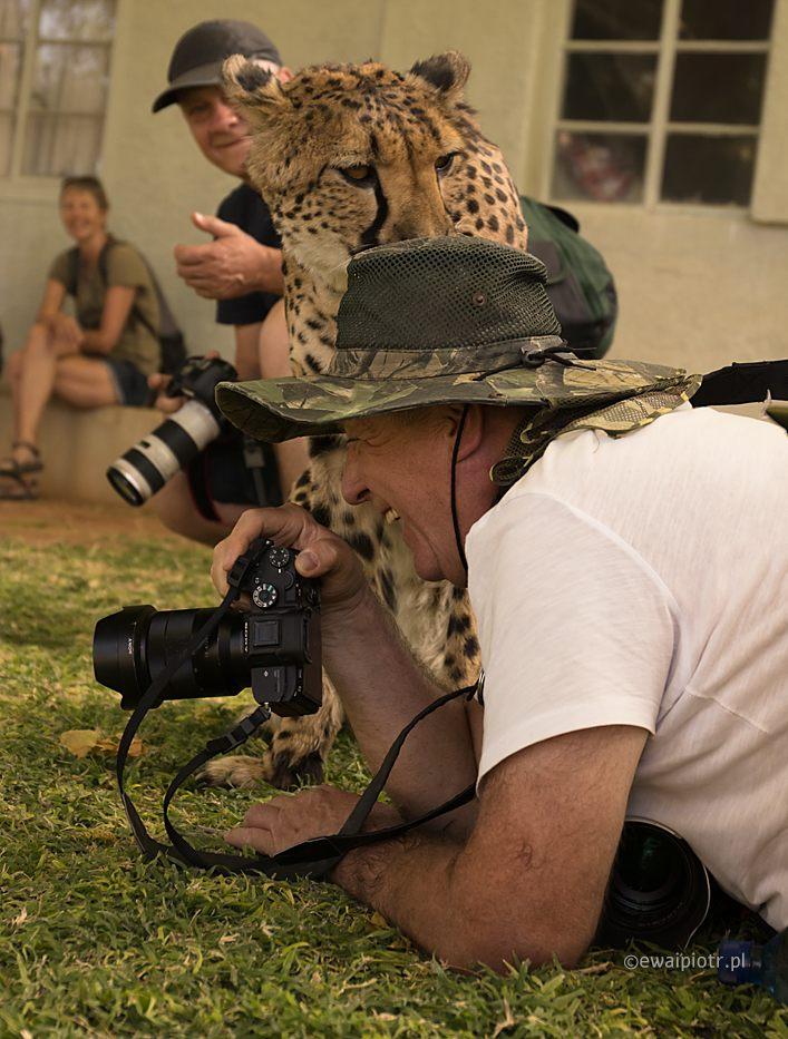 Gepardy i ludzie, Namibia