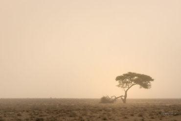 Drzewo w burzy pyłowej, Namibia, przestrzeń negatywna