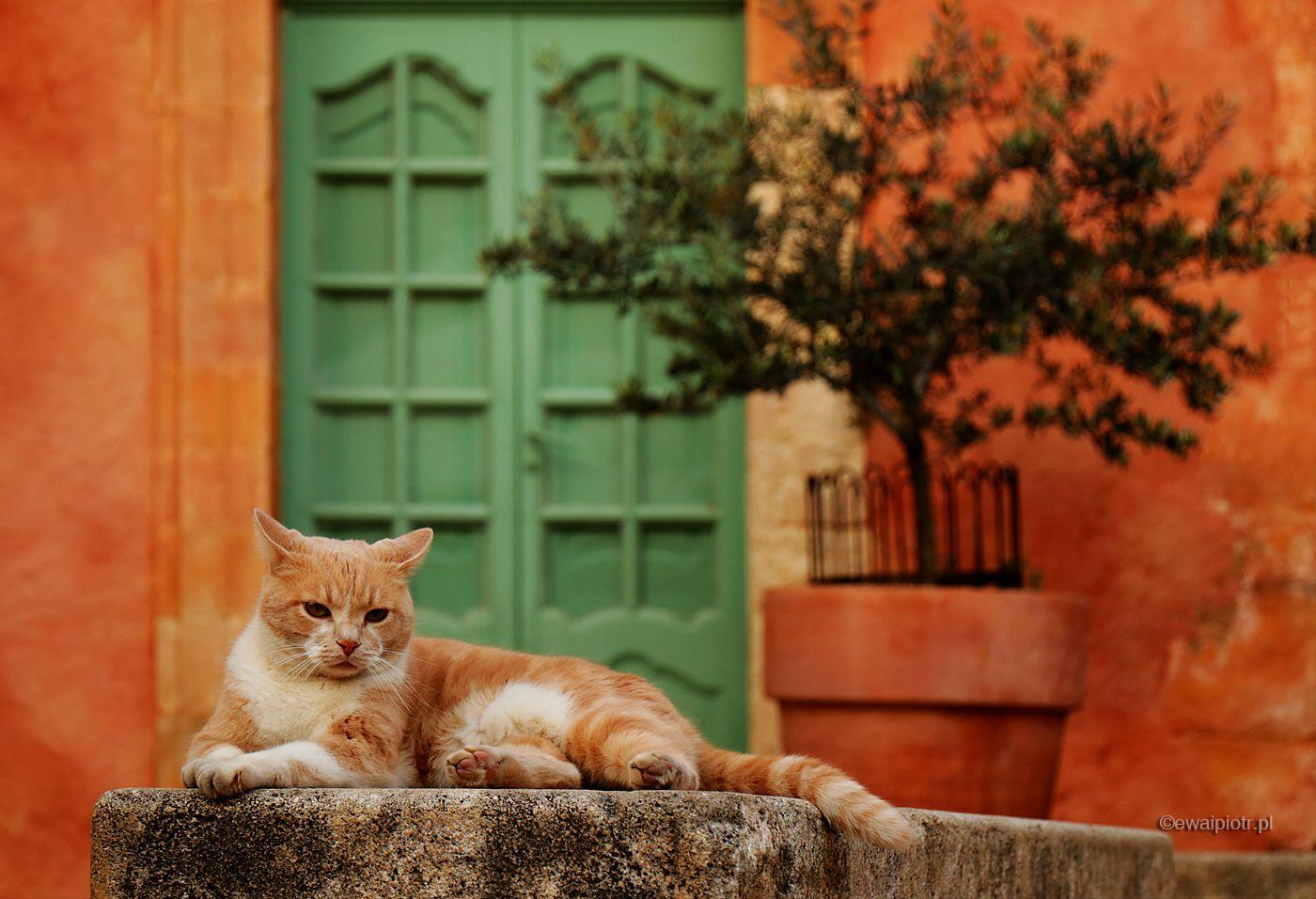Kot z Roussillon, Prowansja