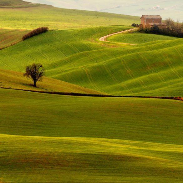 Toskania - drzewo i willa, długa ogniskowa w krajobrazie