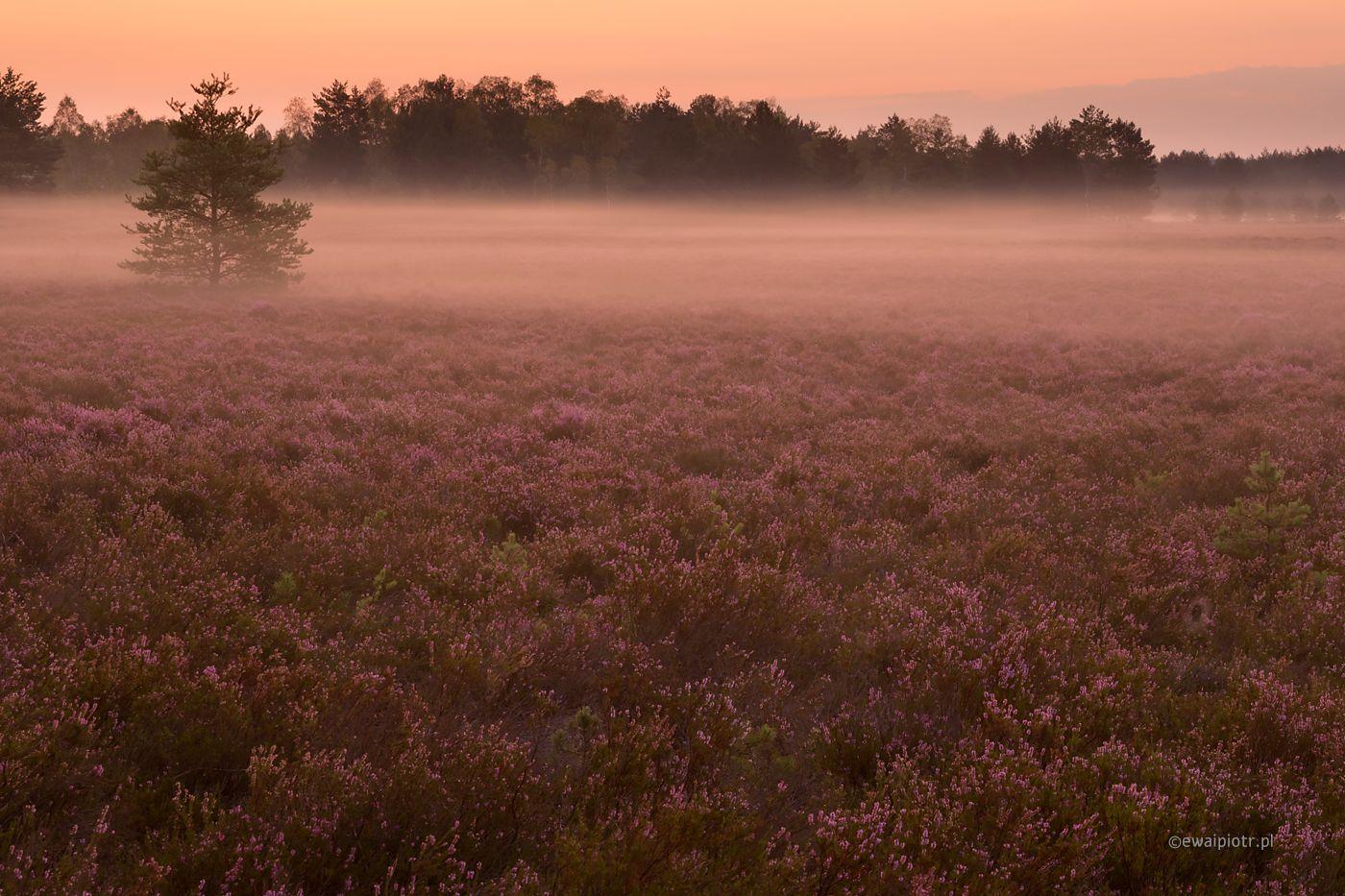 Mgły na wrzosowisku, Wrzosowa Kraina