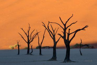 Martwe drzewa Deadvlei, Namibia