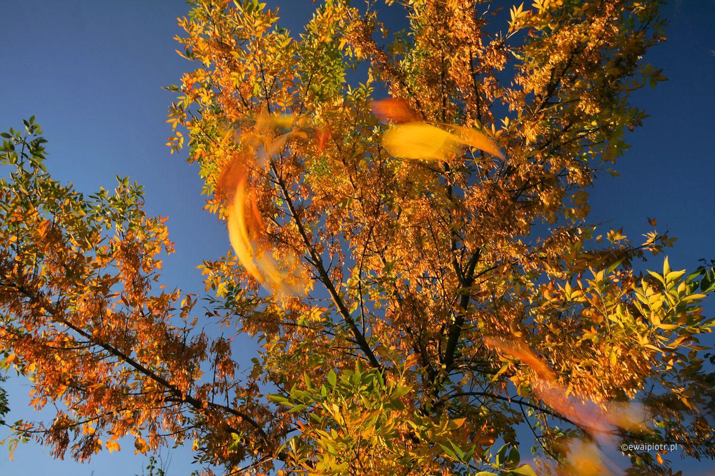 Złota jesień w górach warsztaty fotograficzne
