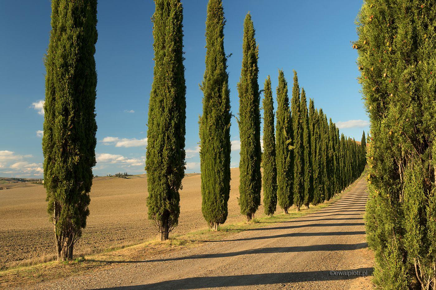 Aleja cyprysów, Toskania, fotowyprawa