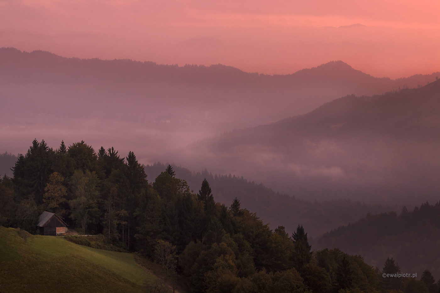 Różowy poranek pod św. Tomaszem, Słowenia