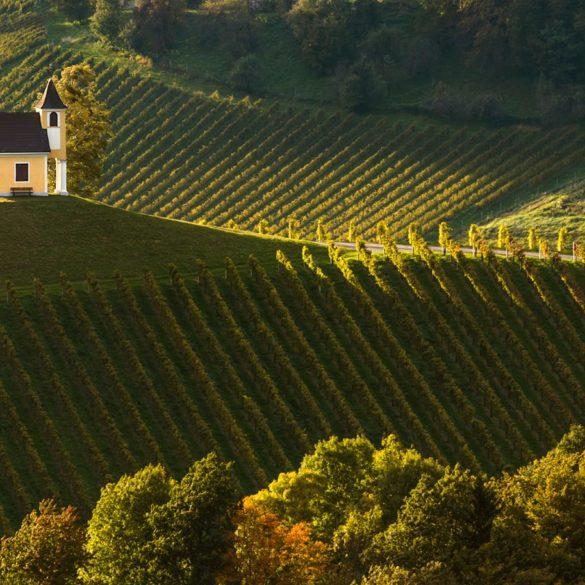 Kościół w winnicy, Słowenia, fotowyprawa