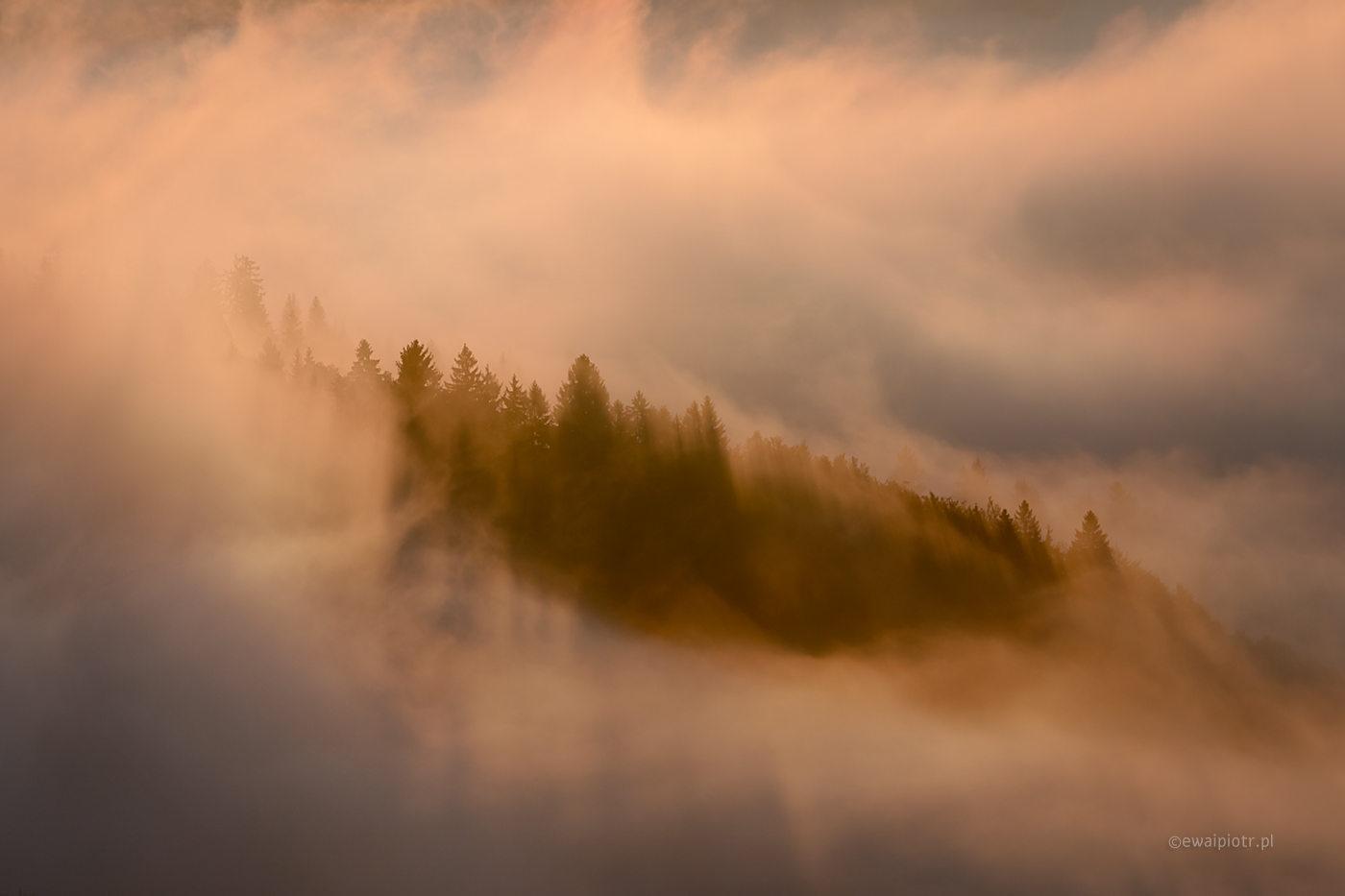 Las we mgle, Słowenia, poprawna ekspozycja i mgła