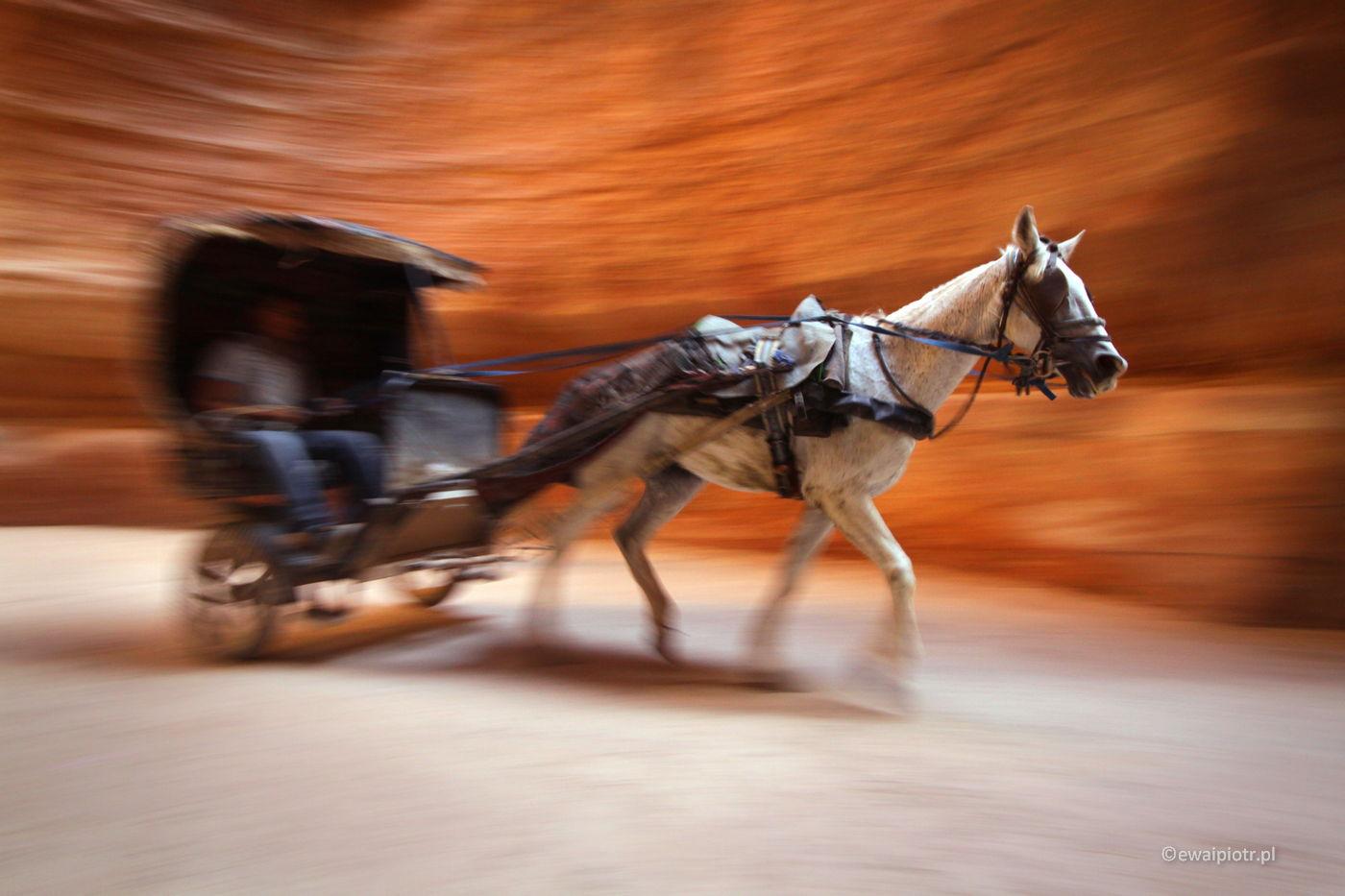 Dorożka w drodze do Petry, Jordania, panoramowanie, panning, warsztaty fotograficzne