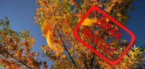 Złoty Czas Jesieni – październik 2019 Złoty Czas Jesieni – październik 2019
