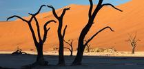 Fotowyprawa do Namibii – maj/czerwiec 2021 Fotowyprawa do Namibii – maj/czerwiec 2021