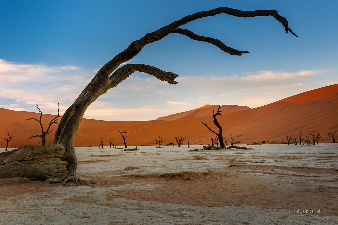 Deadvlei, Namibia, wyprawa fotograficzna