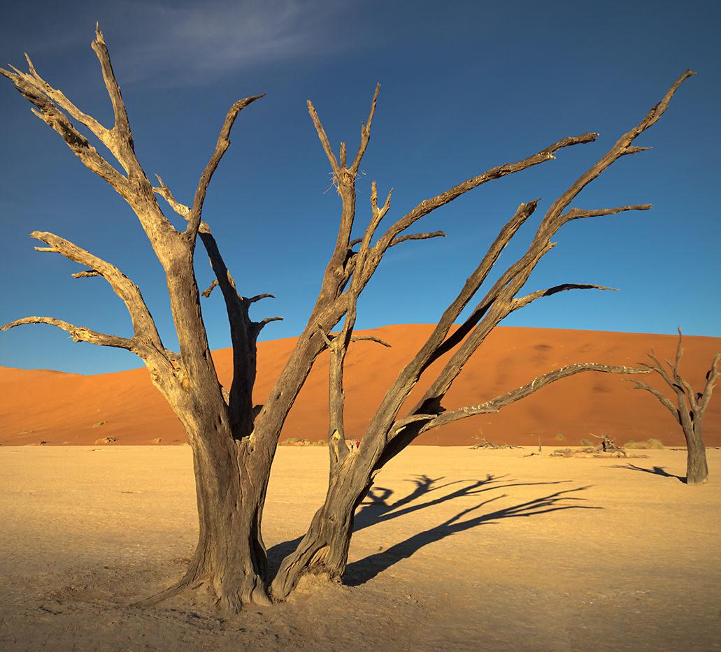 Martwe drzewo, Namibia, pustynia Namib, plener fotograficzny, fotowyprawa