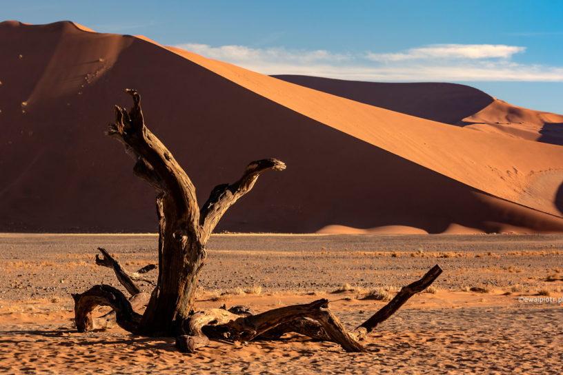 Drzewo i pustynia Namib, Namibia, prognozy 2020, fotografia