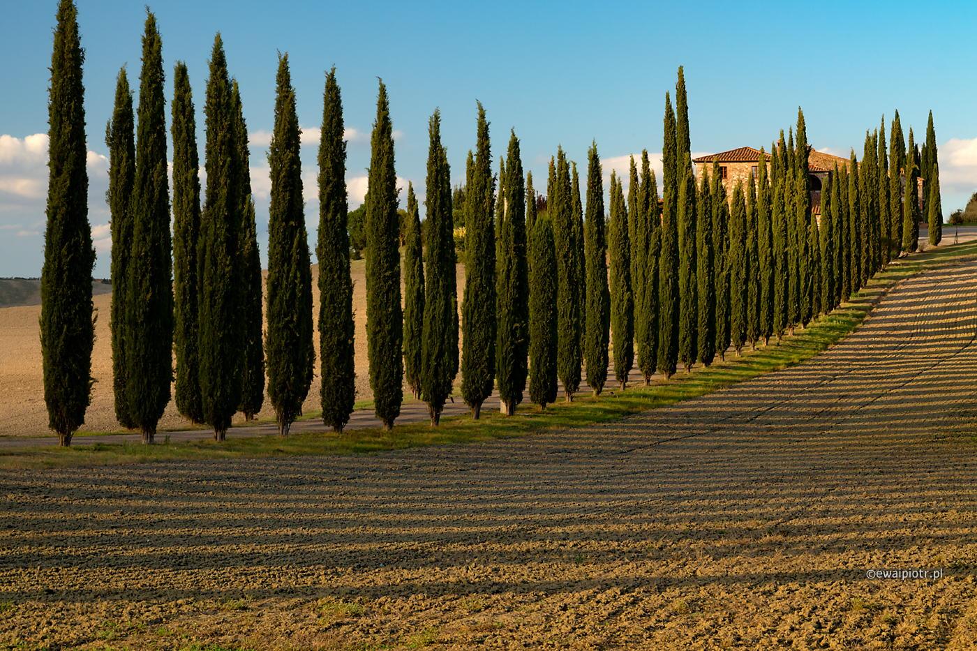 Aleja cyprysów, Toskania