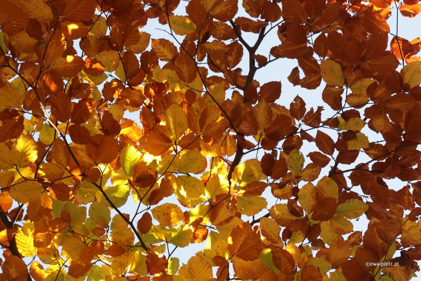 Jesienne słońce przez liście - tutorial