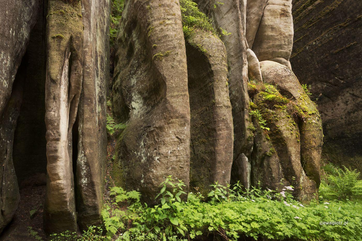 Słoniątko w Adrspachu, Skalne Labirynty