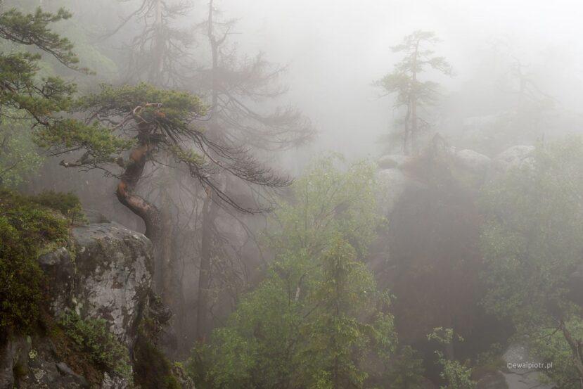 Sosny we mgle, Skalne Labirynty Szczelińca
