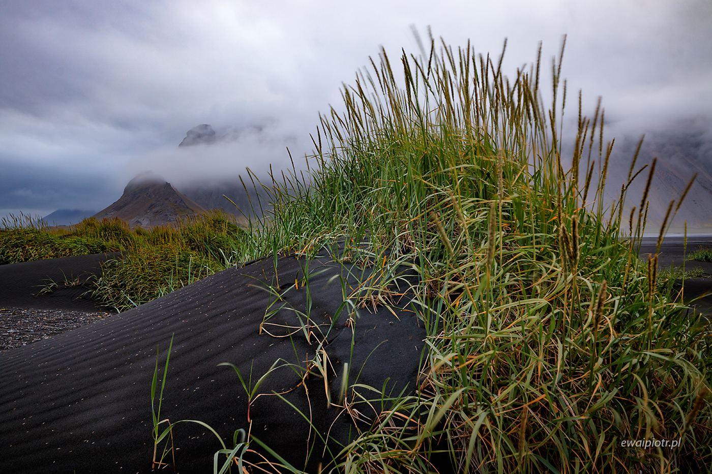 Czarna wydma ze Stokksnes, Islandia