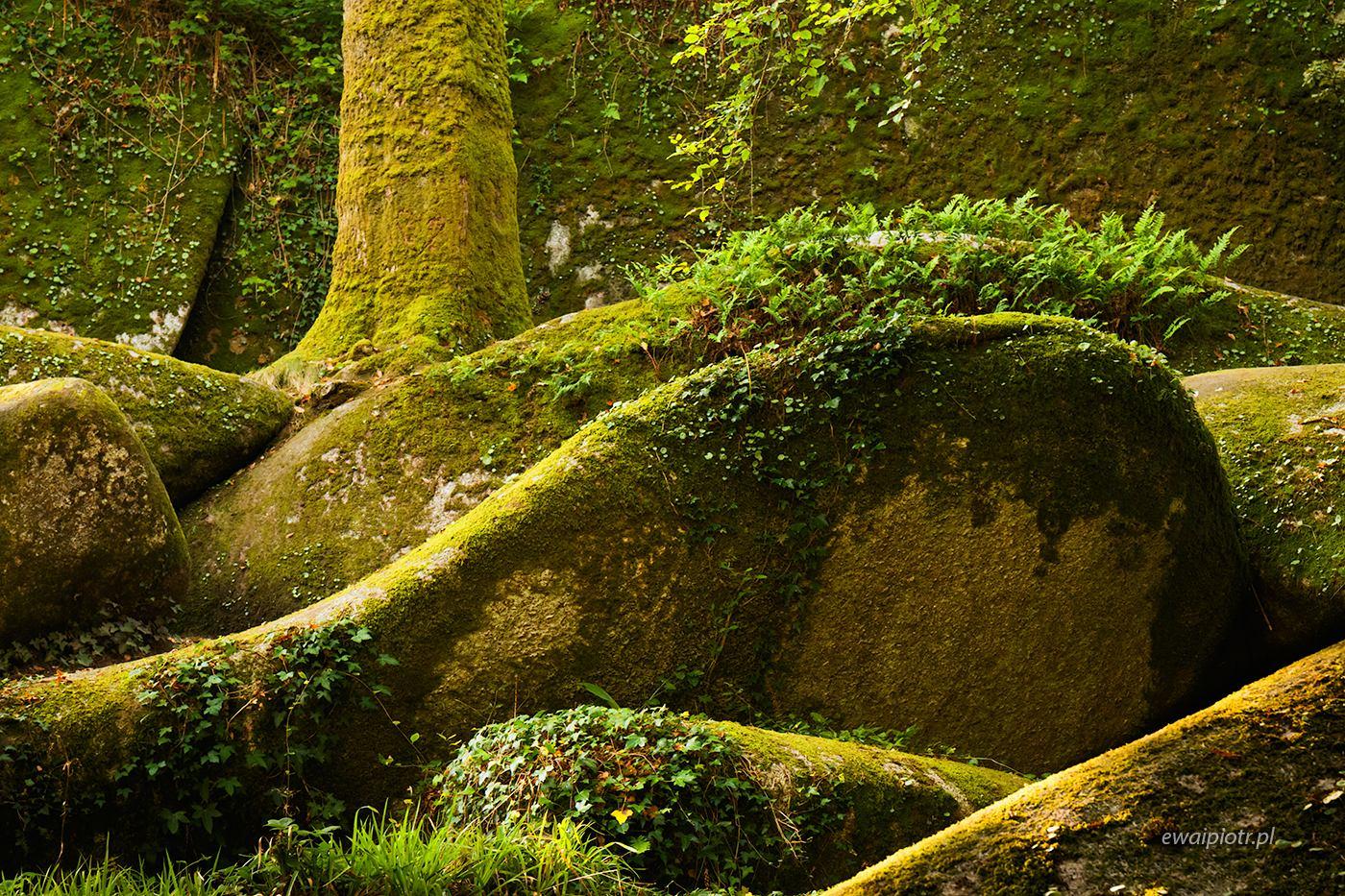 las Huelgoat, Bretania, warsztaty fotograficzne