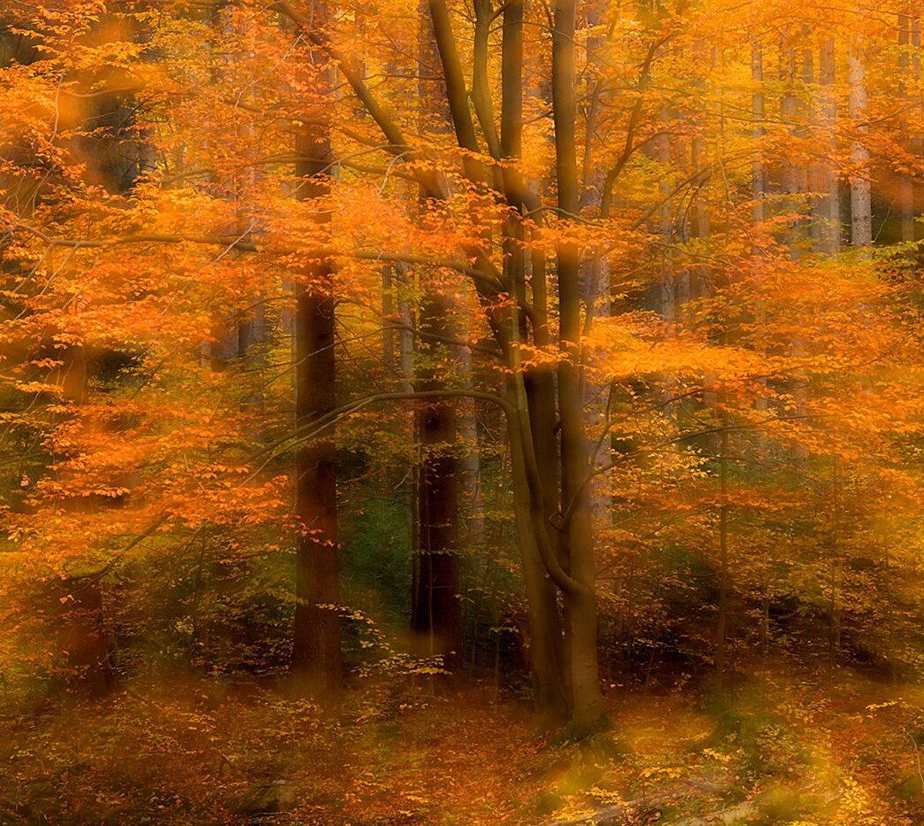 Złota jesień w karkonoskim lesie
