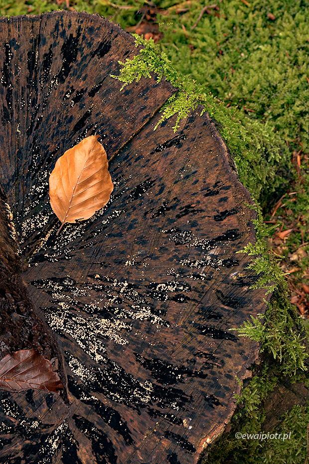 Jesienny liść i mchy