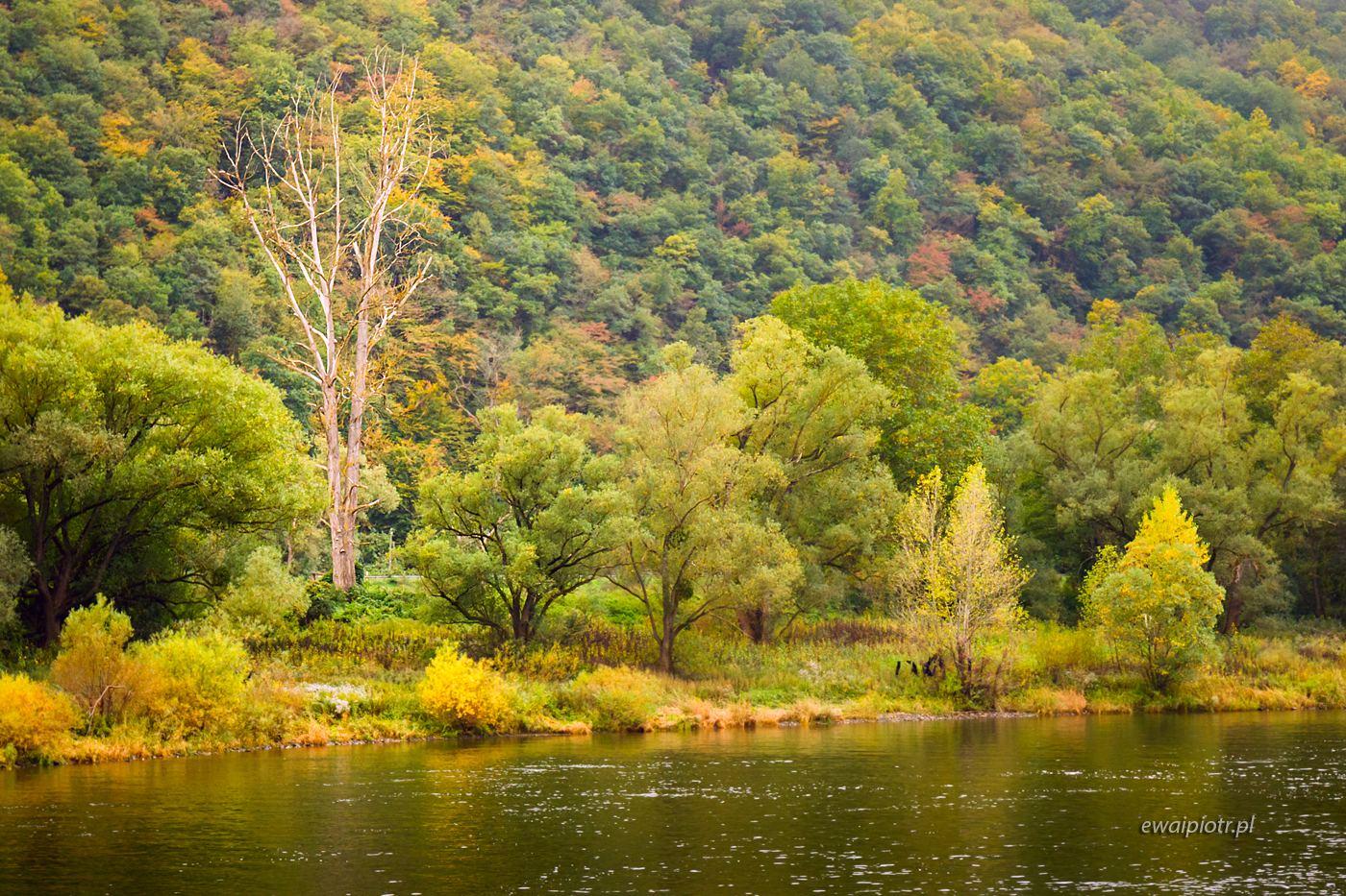 Nadreńskie krajobrazy, Złoto Renu