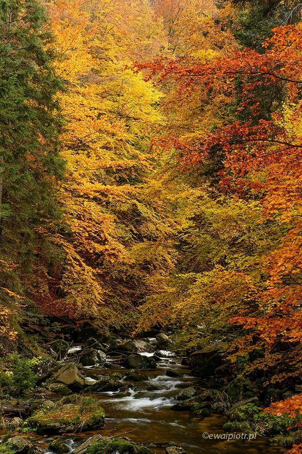 Złoty czas jesieni: trzy kolory i woda