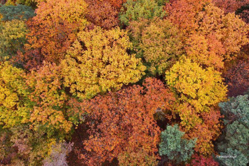 Jesienne drzewa z góry, najlepszy dron dla podróżnika