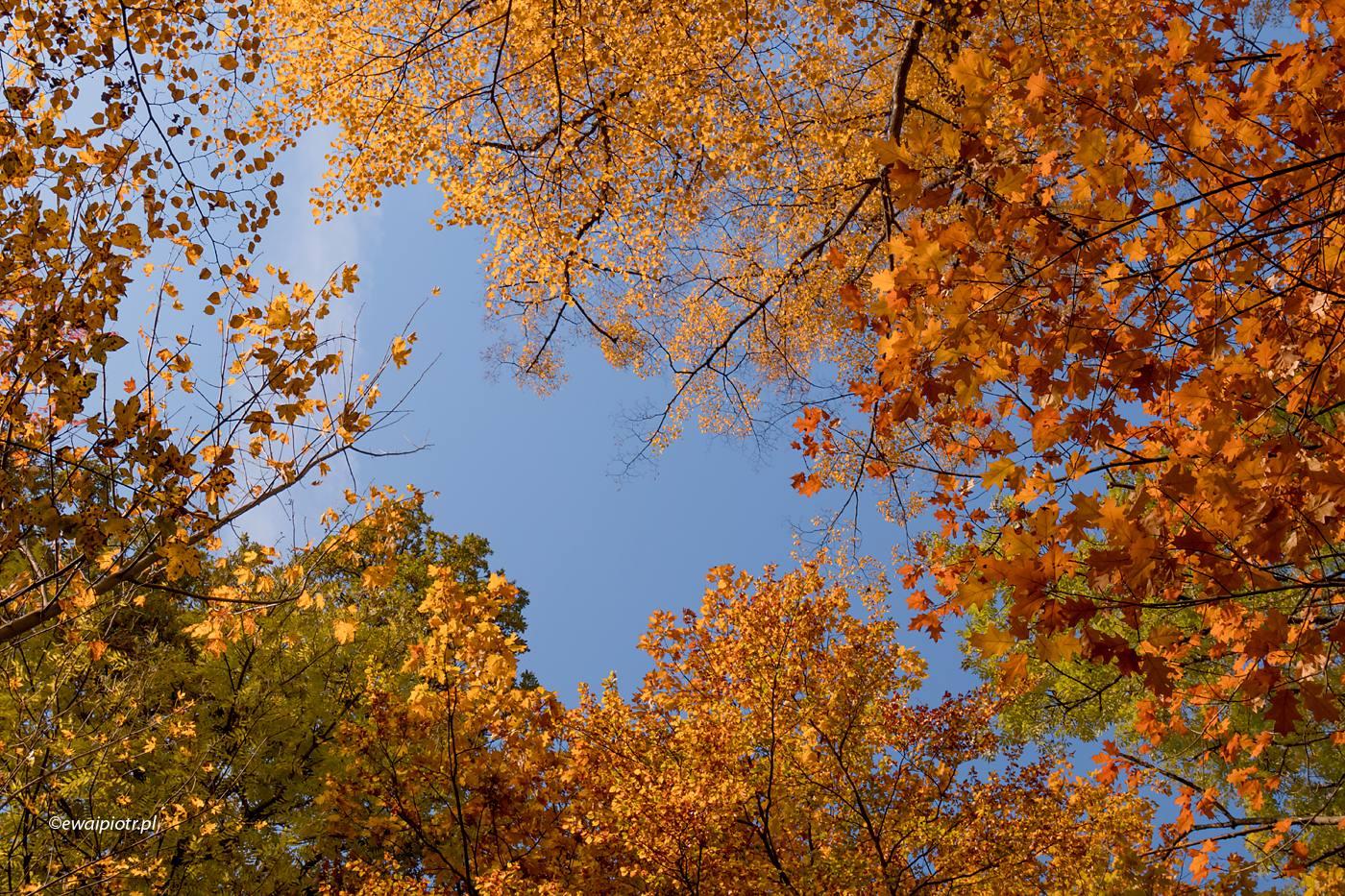 Złoty czas jesieni w Szklarskiej Porębie, warsztaty fotograficzne