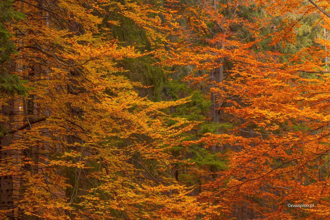 jesienny las - faktura