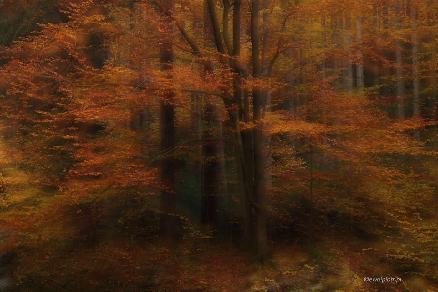 Złota jesień w Karkonoszach - zdjęcie rozostrzone