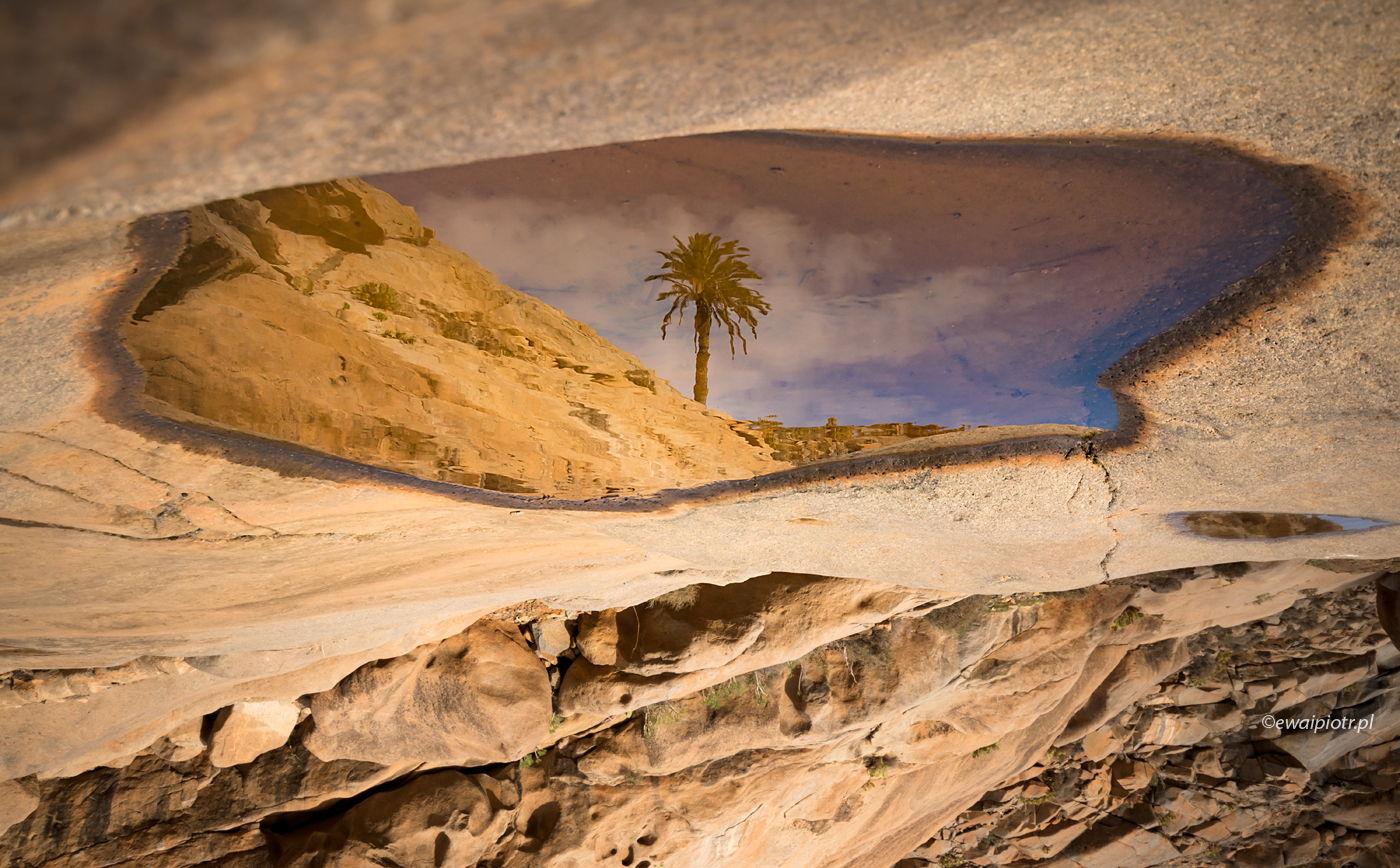 Palma i oaza, Wyspy Kanaryjskie