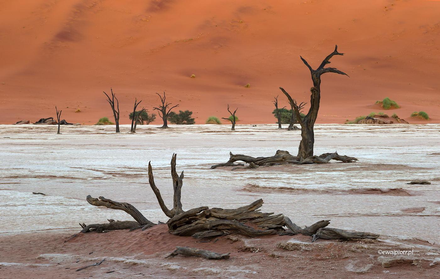 Pustynia w cieniu, Namibia