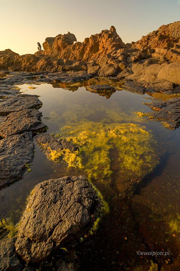 Kamienie i wodorosty, Gran Canaria, Wyspy Kanaryjskie